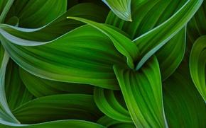 Картинка HTC, Original, HTC Sense, Curves of green