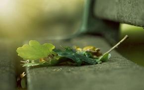 Картинка скамейка, размытость, Листья, бубовые