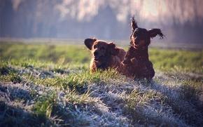Картинка собаки, трава, радость, брызги, настроение, газон, отдых, собака, прогулка, colours, dogs