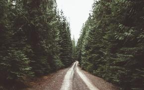 Картинка дорога, лес, даль