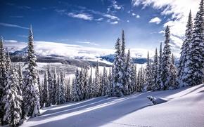 Картинка зима, снег, красота, Canada