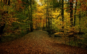 Картинка осень, лес, листва, тропа, colors, дорожка, forest, мостик, листопад, bridge, Autumn, leaves, path, fall