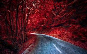 Картинка дорога, лес, цвет