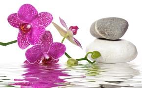 Обои вода, спа камни, цветы, орхидея
