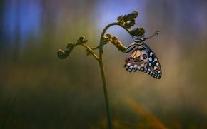 Картинка макро, бабочка, растение, обои от lolita777