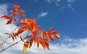 Картинка осень, небо, листья, облака, ветки, природа