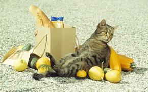 Обои покупки, падение, кот