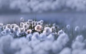 Картинка цветы, природа, красота, Flowers of Heaven