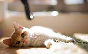 Картинка взгляд, котёнок, мордашка, Hannah, © Benjamin Torode