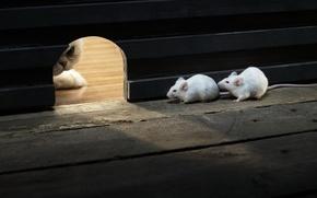 Обои кошка, охота, мыши