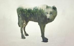 Обои лес, природа, скала, волк, обработка