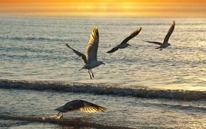 Картинка море, волны, закат, птицы, чайки, обои от lolita777