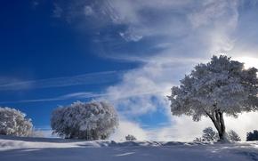 Обои зима, снег, деревья, природа