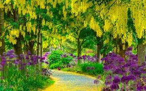 Картинка дорога, лето, деревья, цветы, парк, Пейзажи