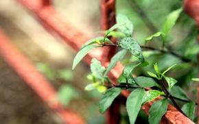 Картинка листья, вода, макро, зеленый, роса, фон, widescreen, обои, листик, wallpaper, листочек, широкоформатные, background, полноэкранные, HD …