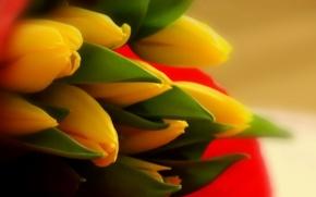 Картинка макро, природа, тюльпаны