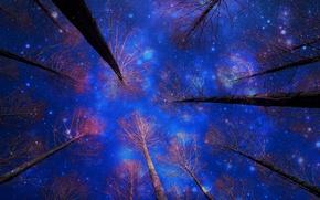 Картинка зима, небо, снег, деревья, ночь