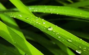 Картинка лист, зеленый, капля