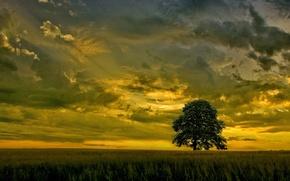 Обои небо, тучи, закат, поле, дерево