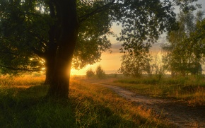 Картинка сельская местность, природа, Германия, деревья, дорога, трава, тропа, тропинка, вечер, солнце, Нижняя Саксония, Sieringhoek, Lower ...