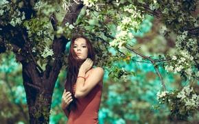 Картинка девушка, дерево, сад
