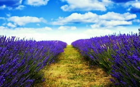 Картинка field, nature, flowers, blur, trail, lavender