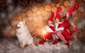 Картинка девушка, снег, дети, собака, сани, колпаки, самоед