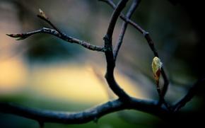 Картинка листья, макро, ветки, ветка, весна