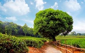 Картинка поле, лес, тропа, ограда