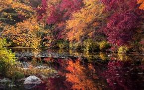 Картинка осень, лес, деревья, озеро, камень