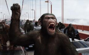 Обои мост, сан франциско, Rise of the Planet of the Apes, Восстание планеты обезьян, машины, обезьяны