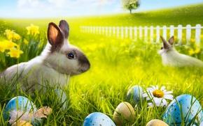 Картинка трава, цветы, ромашки, яйца, радуга, весна, кролик, луг, пасха, rainbow, grass, sunshine, rabbit, flowers, spring, …