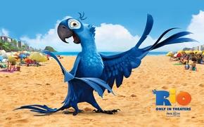 Картинка рио-де-жанейро, перья, голубой ара, красочно, крылья, рио, попугай, пляж, клюв, мультфильм, песок, птица, ярко, голубчик