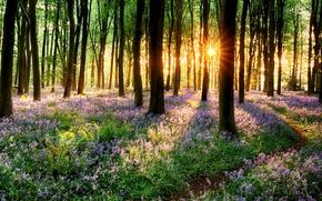 Обои дорога, лес, трава, деревья, закат, цветы, природа, парк, весна, grass, forest, road, trees, nature, sunset, ...
