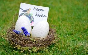Картинка трава, цветы, яйцо, пасха, гнездо, easter