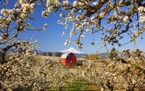 Картинка деревья, пейзаж, дом, гора, весна, сад, яблони