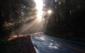 Картинка дорога, лес, солнце, пейзаж, природа