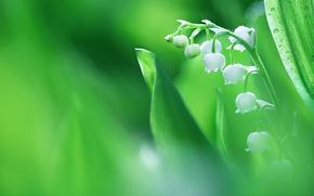 Обои макро, ландыш, весна