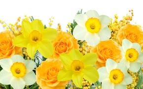 Картинка белый, цветы, желтый, весна, white, yellow, flowers, нарциссы, spring, delicate, мимоза, mimosa, daffodils