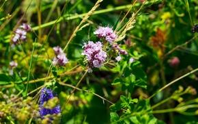 Картинка цветы, природа, Лето