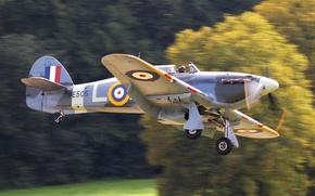 """Картинка истребитель, британский, WW2, Hawker, одноместный, """"Ураган"""", Hurricane Mk IIB"""