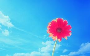 Обои лето, небо, Природа, цветок