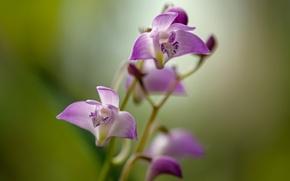 Картинка цветок, стебли, лепестки, фиолетовый цветок