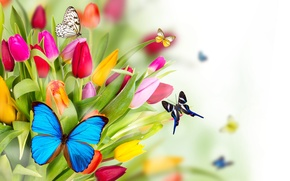 Обои цветы, тюльпаны, бабочки, весна