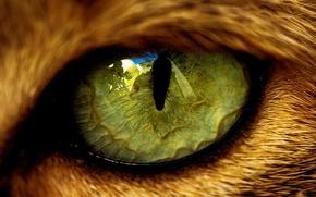 Обои животное, кошачий, зрачок, отражение, глаз, зверь, шерсть