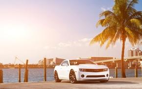 Картинка белый, небо, мост, город, пальма, побережье, Chevrolet, Camaro, white, шевроле, мускул кар, небоскрёбы, передняя часть, ...