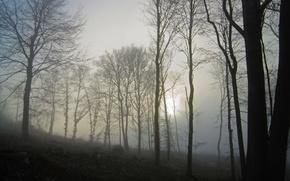 Картинка осень, лес, Туман, dark, forest, autumn, fog