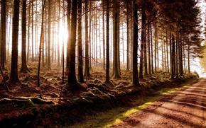 Картинка road, fog, miracle woods, beautiful sunrise