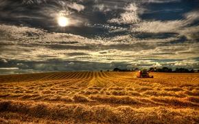 Картинка поле, лето, небо, пейзаж