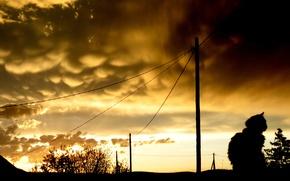 Картинка небо, кот, вечер